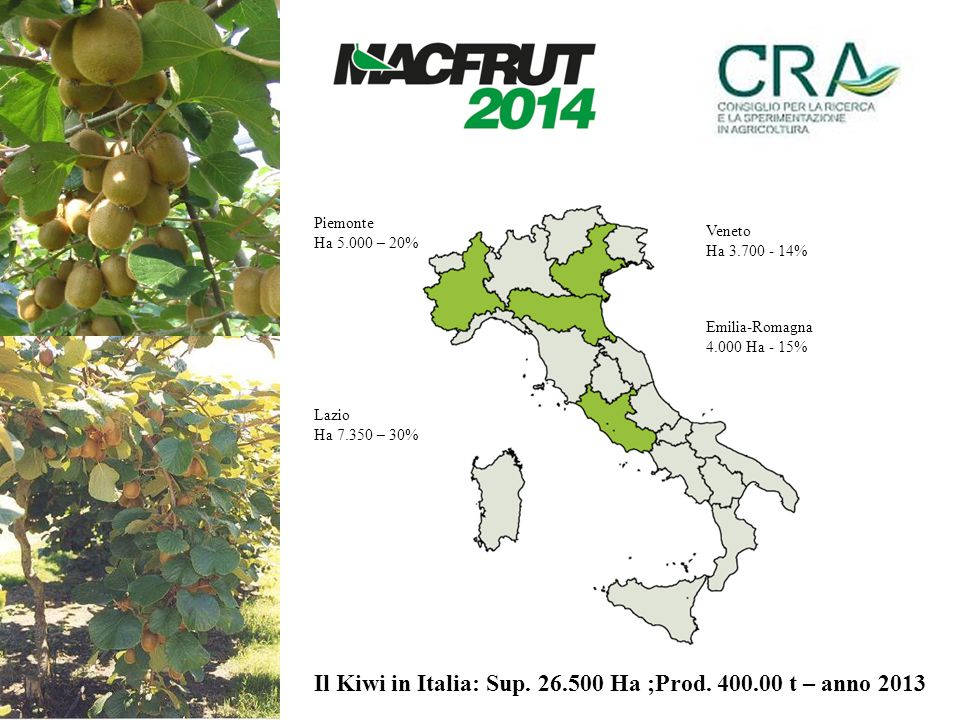 Emilia-Romagna 4.000 Ha - 15% Il Kiwi in Italia: Sup. 26.500 Ha ;Prod. 400.00 t – anno 2013 Veneto Ha 3.700 - 14% Lazio Ha 7.350 – 30% Piemonte Ha 5.0