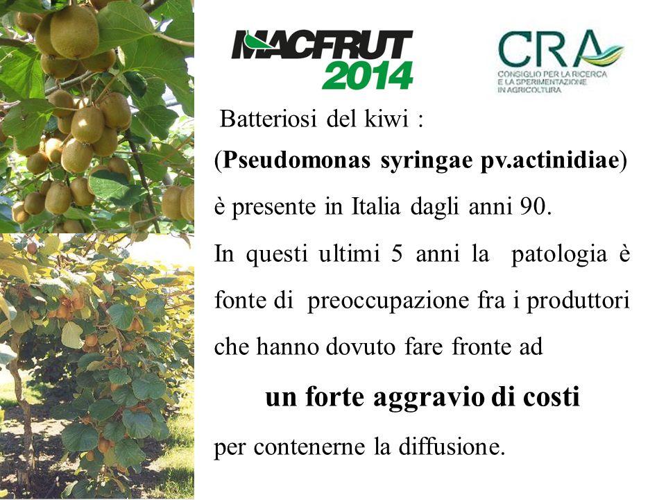 Batteriosi del kiwi : (Pseudomonas syringae pv.actinidiae) è presente in Italia dagli anni 90. In questi ultimi 5 anni la patologia è fonte di preoccu
