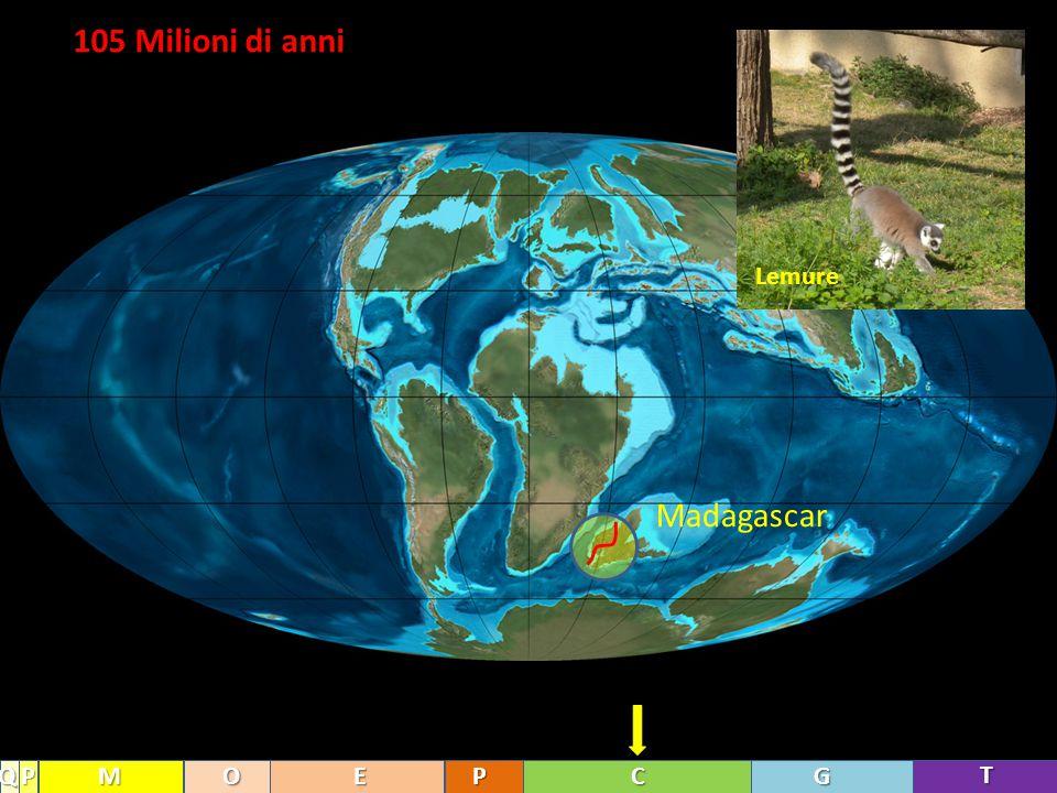 105 Milioni di anni T GCPEOMPQ Madagascar Lemure