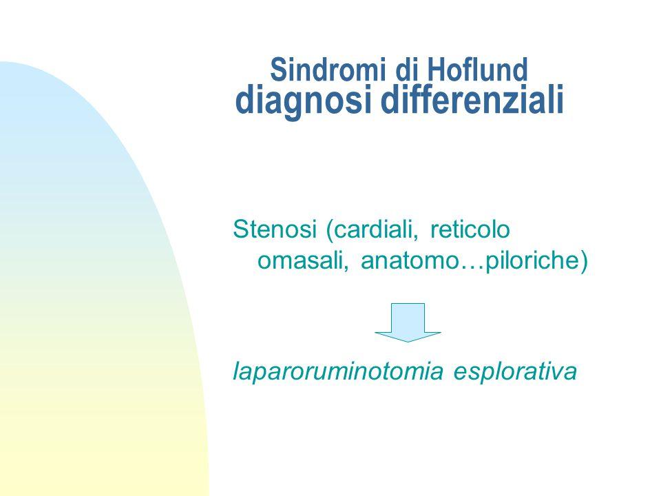 Sindromi di Hoflund stenosi funzionale posteriore (aspetti clinici) Laparatomia esplorativa: n costipazione di omaso e abomaso
