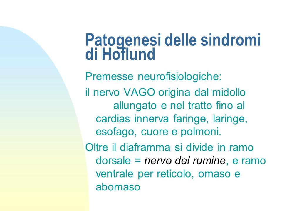 Cause delle sindromi di Hoflund n Esiti di reticoloperitonite traumatica a) aderenze sul lato destro del pavimento del reticolo b) ascessi del reticol