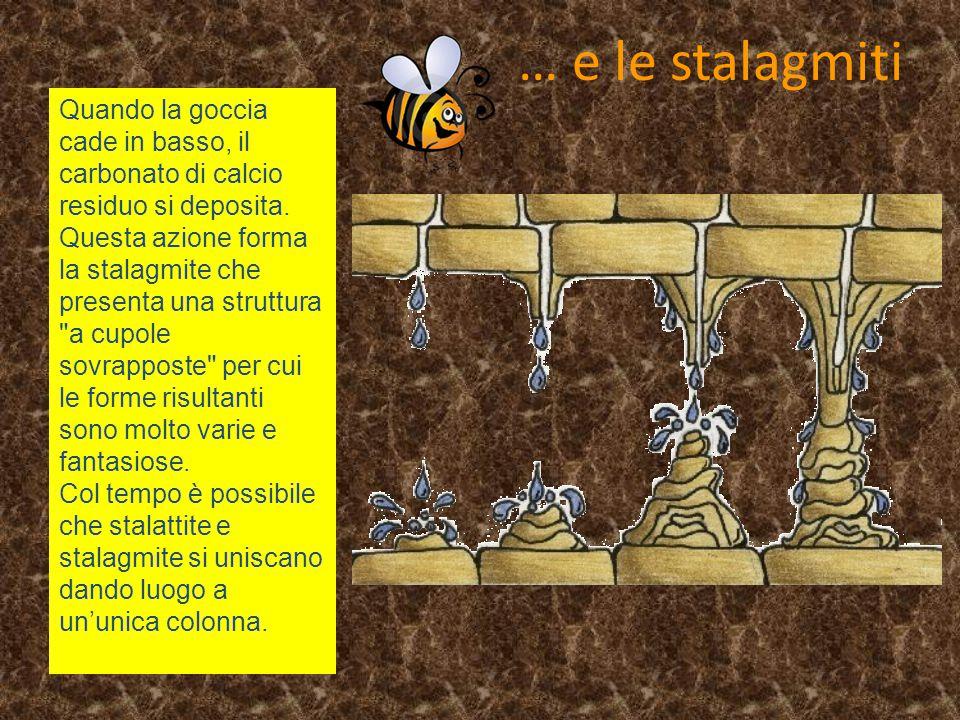 … e le stalagmiti Quando la goccia cade in basso, il carbonato di calcio residuo si deposita. Questa azione forma la stalagmite che presenta una strut