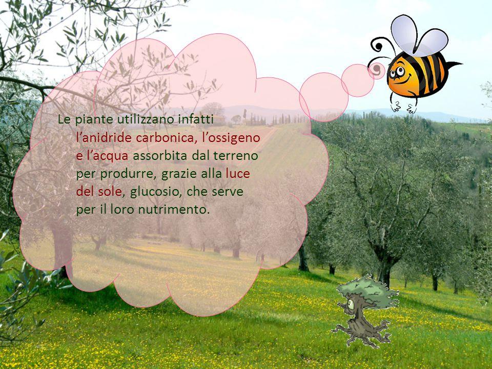 Le piante utilizzano infatti l'anidride carbonica, l'ossigeno e l'acqua assorbita dal terreno per produrre, grazie alla luce del sole, glucosio, che s