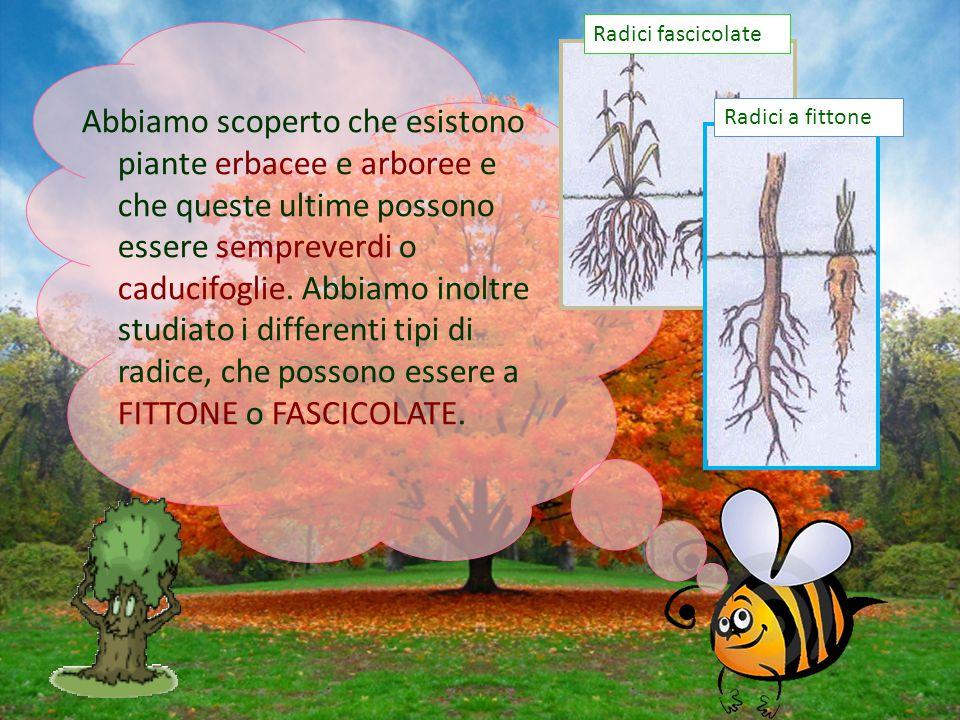 Abbiamo scoperto che esistono piante erbacee e arboree e che queste ultime possono essere sempreverdi o caducifoglie. Abbiamo inoltre studiato i diffe