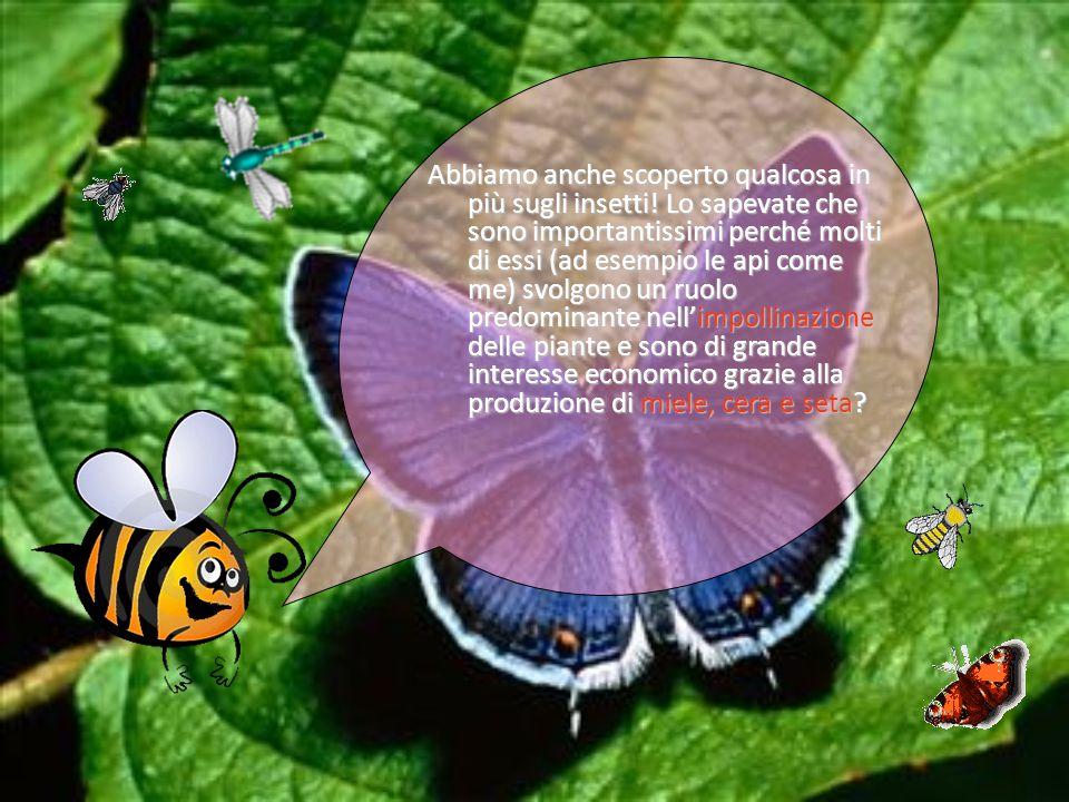 Abbiamo anche scoperto qualcosa in più sugli insetti! Lo sapevate che sono importantissimi perché molti di essi (ad esempio le api come me) svolgono u
