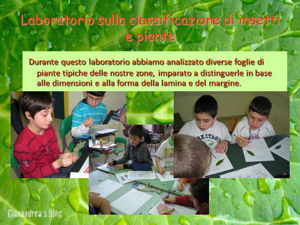 Laboratorio sulla classificazione di insetti e piante Durante questo laboratorio abbiamo analizzato diverse foglie di piante tipiche delle nostre zone