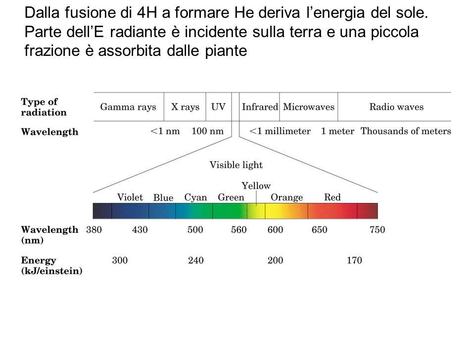 Dalla fusione di 4H a formare He deriva l'energia del sole. Parte dell'E radiante è incidente sulla terra e una piccola frazione è assorbita dalle pia