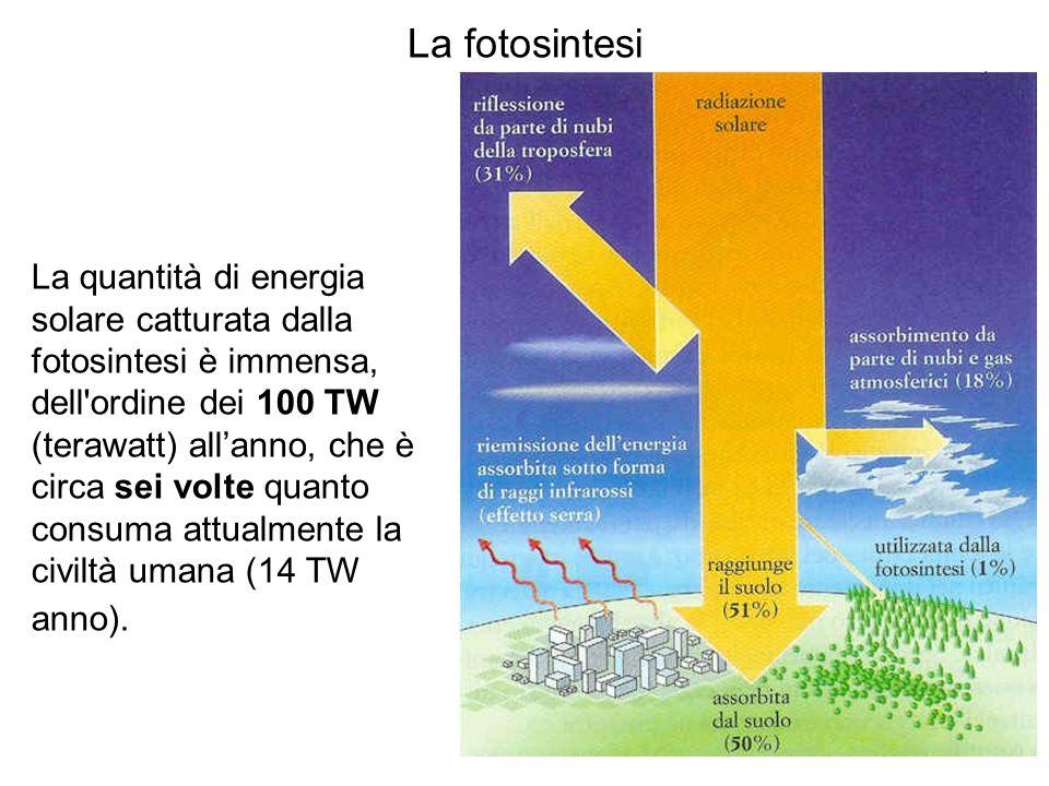 La fotosintesi La quantità di energia solare catturata dalla fotosintesi è immensa, dell ordine dei 100 TW (terawatt) all'anno, che è circa sei volte quanto consuma attualmente la civiltà umana (14 TW anno).