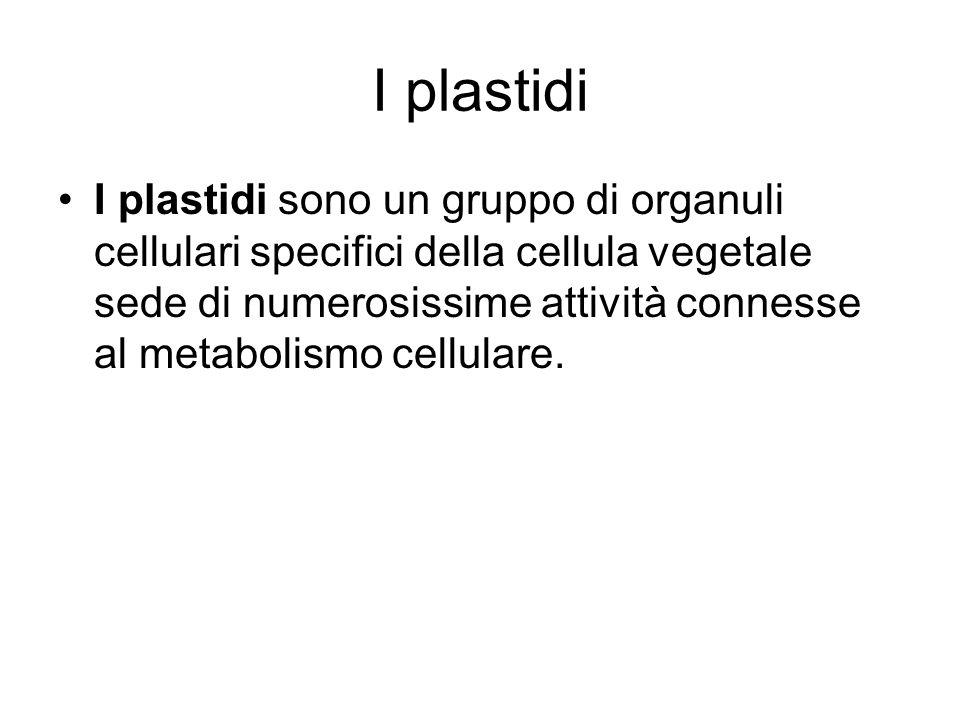 I plastidi I plastidi sono un gruppo di organuli cellulari specifici della cellula vegetale sede di numerosissime attività connesse al metabolismo cel