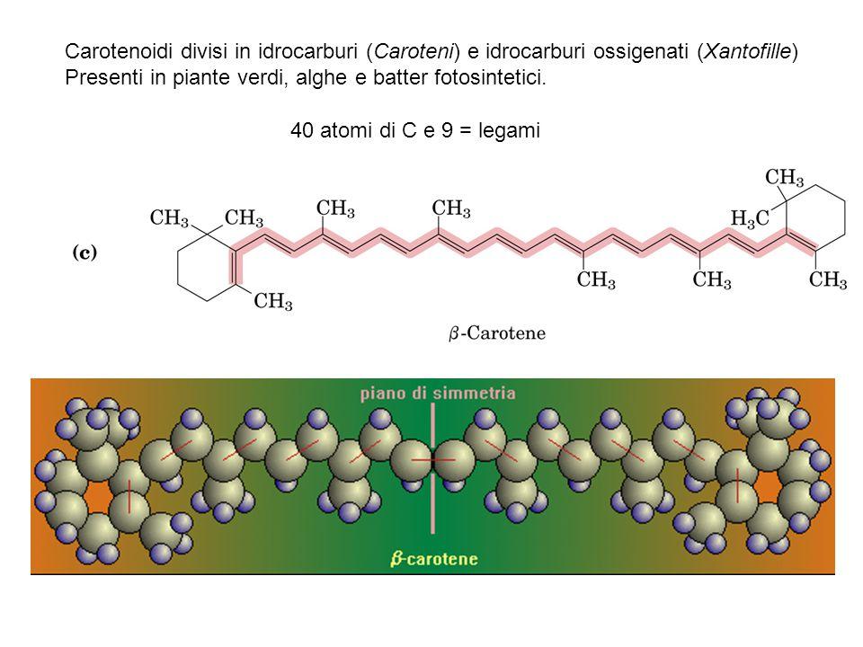Carotenoidi divisi in idrocarburi (Caroteni) e idrocarburi ossigenati (Xantofille) Presenti in piante verdi, alghe e batter fotosintetici. 40 atomi di