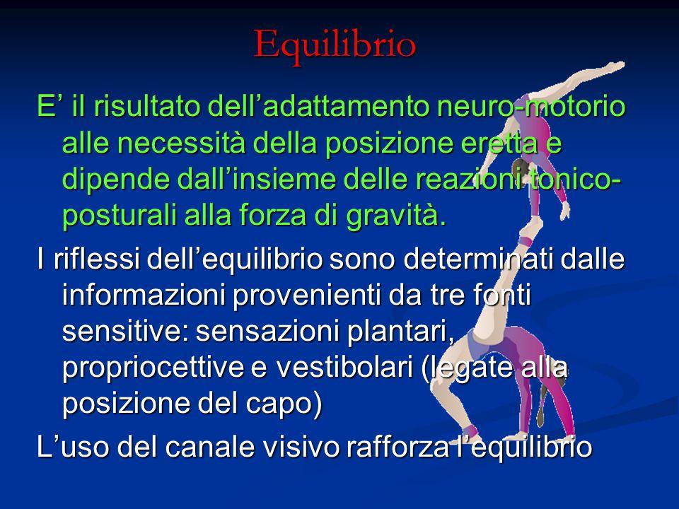 Equilibrio E' il risultato dell'adattamento neuro-motorio alle necessità della posizione eretta e dipende dall'insieme delle reazioni tonico- postural