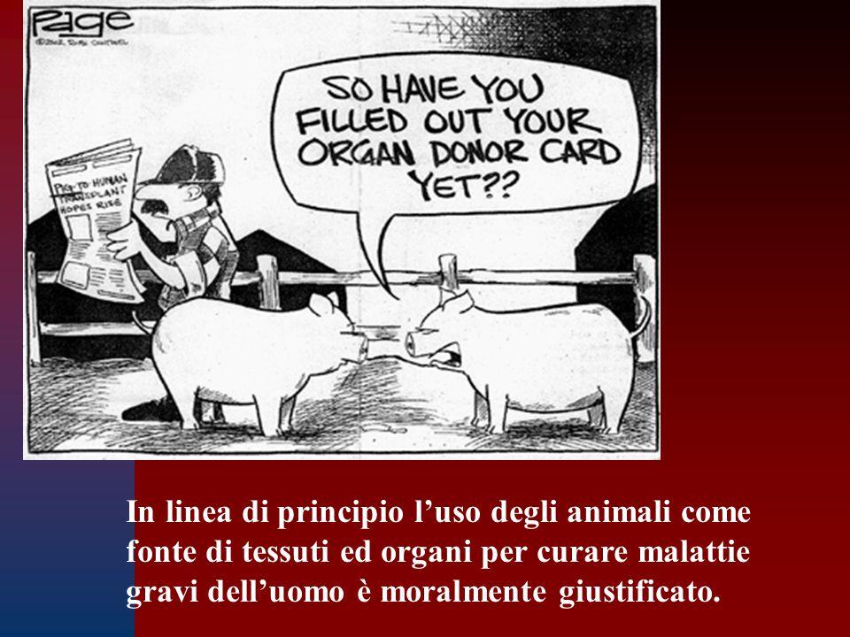 In linea di principio l'uso degli animali come fonte di tessuti ed organi per curare malattie gravi dell'uomo è moralmente giustificato.