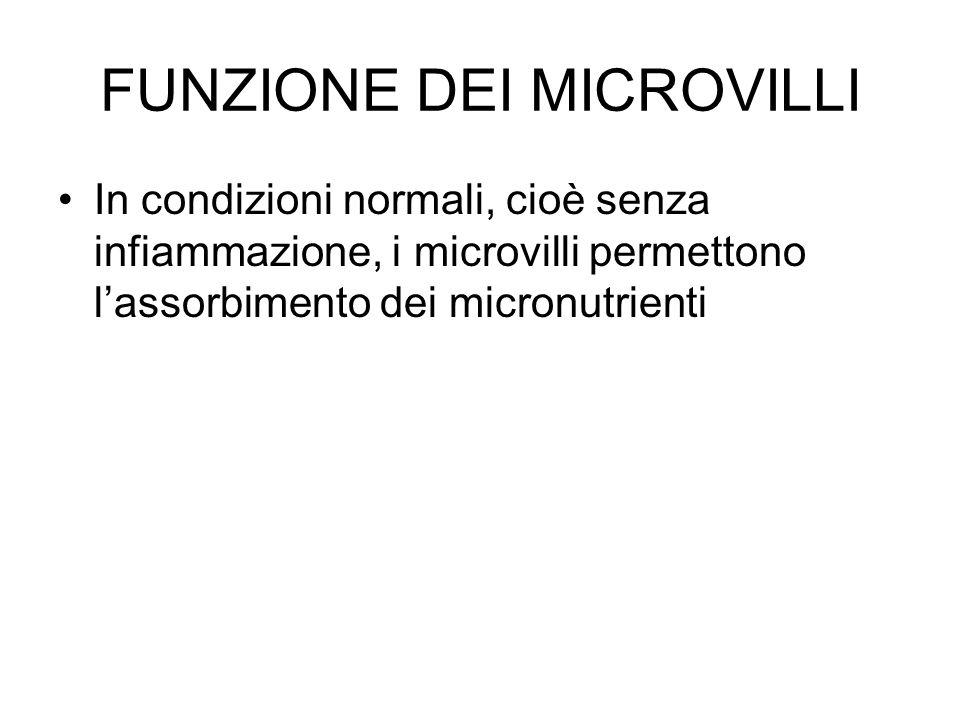 FUNZIONE DEI MICROVILLI In condizioni normali, cioè senza infiammazione, i microvilli permettono l'assorbimento dei micronutrienti