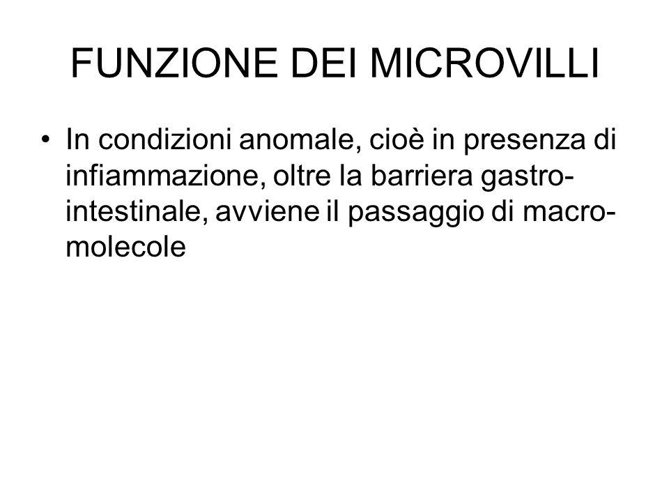 FUNZIONE DEI MICROVILLI In condizioni anomale, cioè in presenza di infiammazione, oltre la barriera gastro- intestinale, avviene il passaggio di macro- molecole