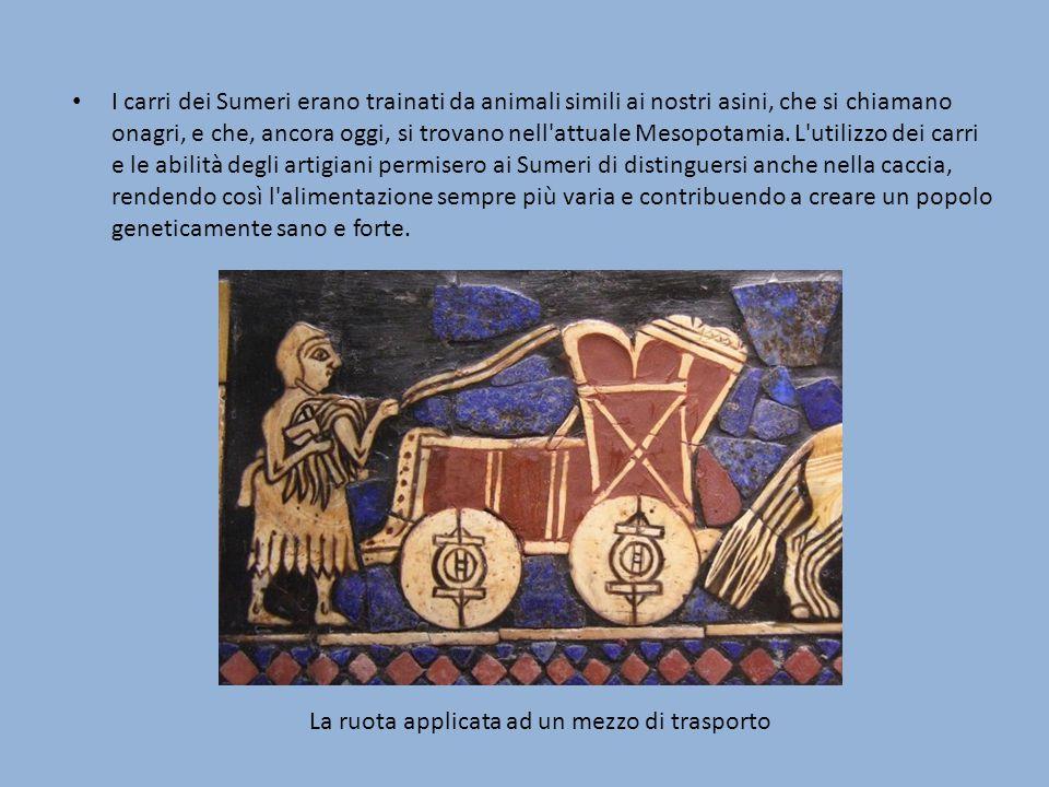 I carri dei Sumeri erano trainati da animali simili ai nostri asini, che si chiamano onagri, e che, ancora oggi, si trovano nell'attuale Mesopotamia.