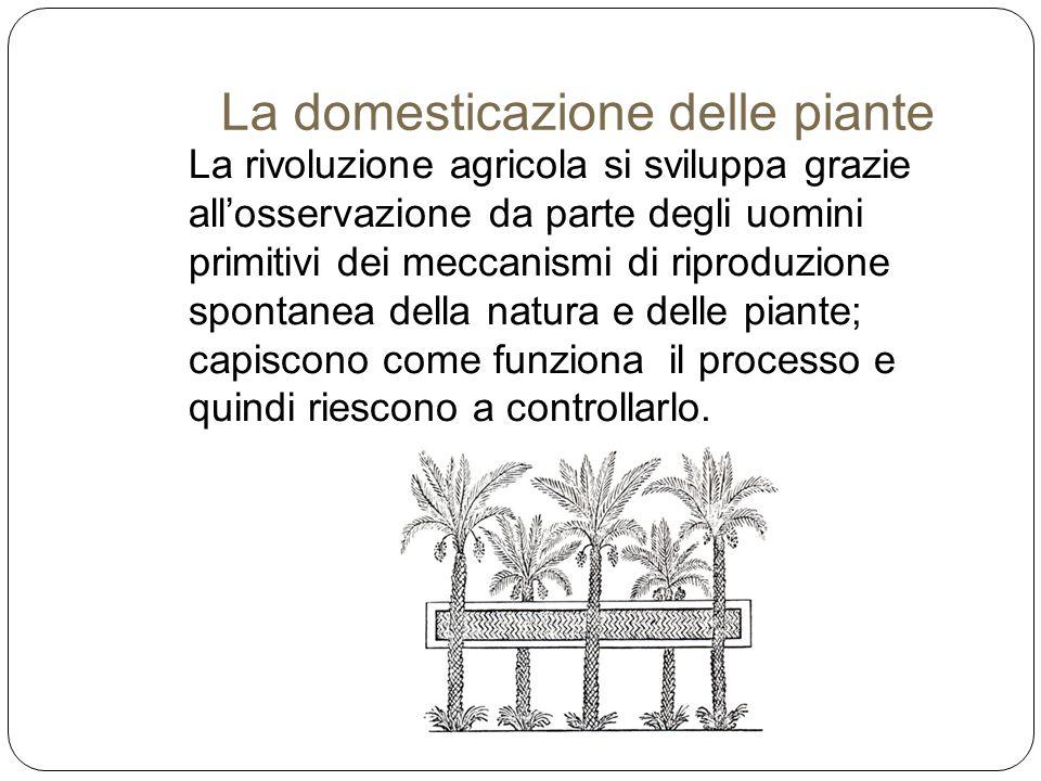 La rivoluzione agricola si sviluppa grazie all'osservazione da parte degli uomini primitivi dei meccanismi di riproduzione spontanea della natura e de