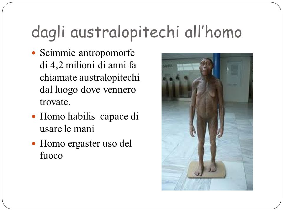 dagli australopitechi all'homo Scimmie antropomorfe di 4,2 milioni di anni fa chiamate australopitechi dal luogo dove vennero trovate. Homo habilis ca