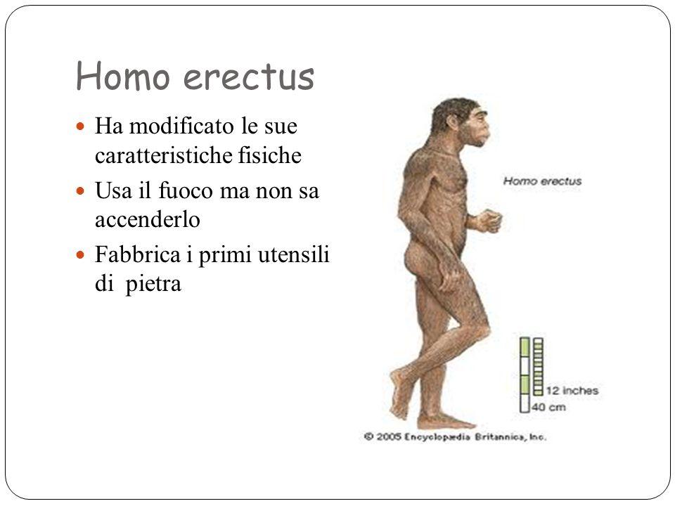 Homo erectus Ha modificato le sue caratteristiche fisiche Usa il fuoco ma non sa accenderlo Fabbrica i primi utensili di pietra