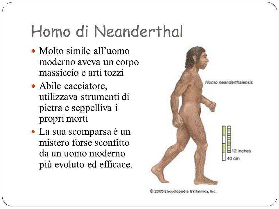 Homo di Neanderthal Molto simile all'uomo moderno aveva un corpo massiccio e arti tozzi Abile cacciatore, utilizzava strumenti di pietra e seppelliva