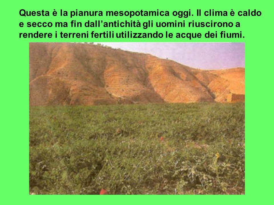 Questa è la pianura mesopotamica oggi. Il clima è caldo e secco ma fin dall'antichità gli uomini riuscirono a rendere i terreni fertili utilizzando le