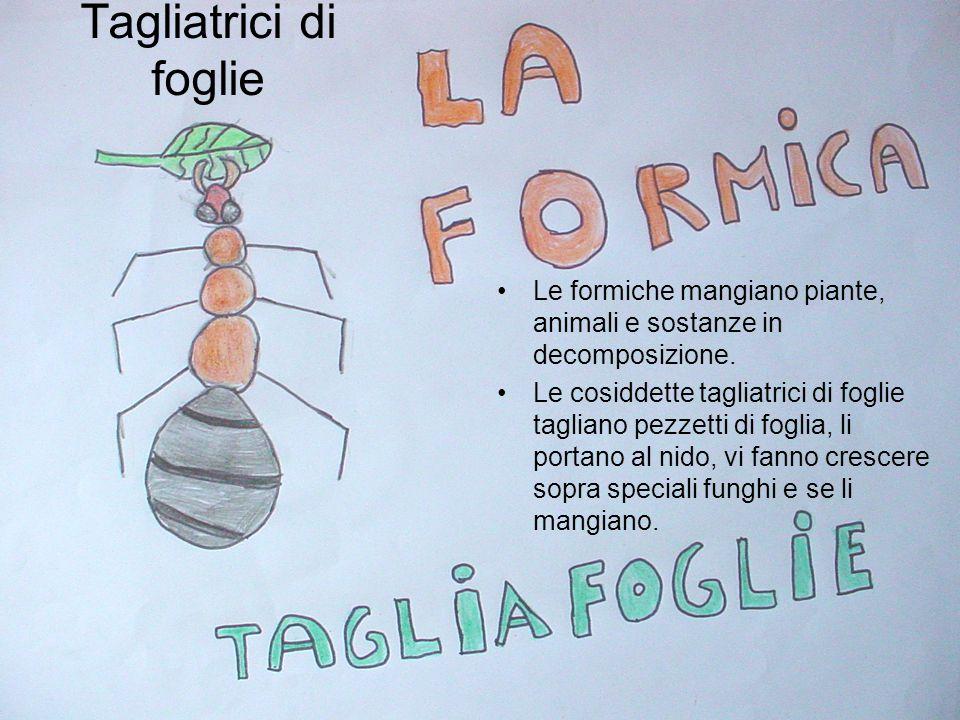 MEZZI PER COMUNICARE Le formiche si scambiano le informazioni riguardanti il cibo, i nemici, i danni al nido, in due modi: producendo speciali sostanz