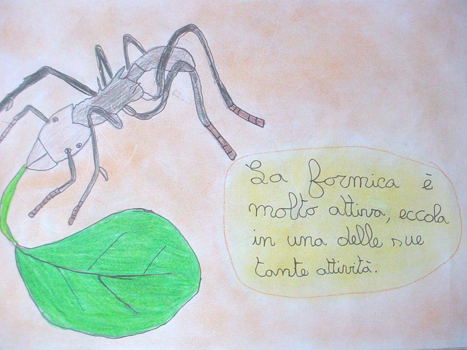 La nutrizione Le formiche tagliafoglie non si nutrono di foglie ma di funghi che coltivano nelle apposite camere sotterranee, dove le foglie tritate e