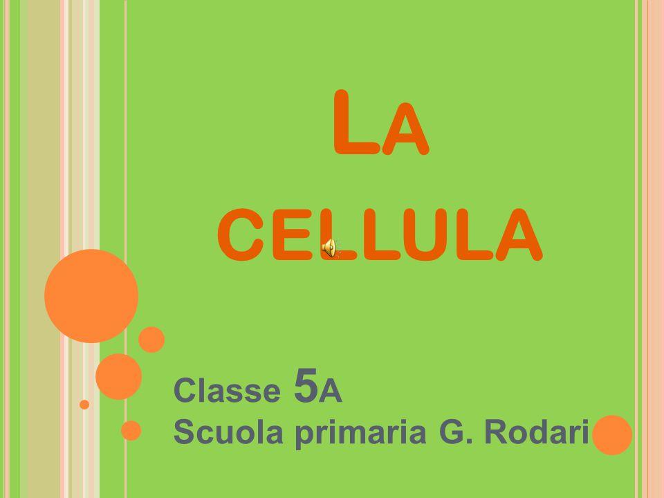 L A CELLULA Classe 5 A Scuola primaria G. Rodari