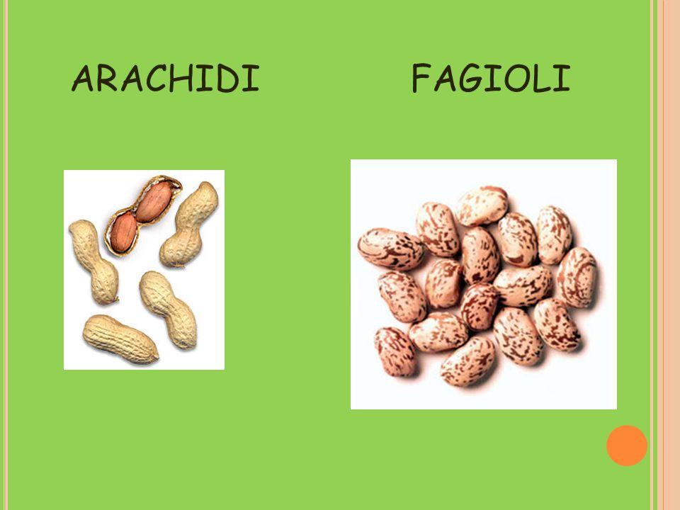 ARACHIDI FAGIOLI