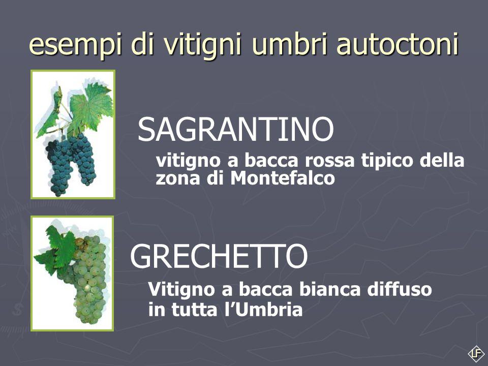 LF I vini a Indicazione Geografica Tipica I. G. T. ► ► il nome geografico può essere accompagnato da altre indicazioni come il nome delle uve (vitigni