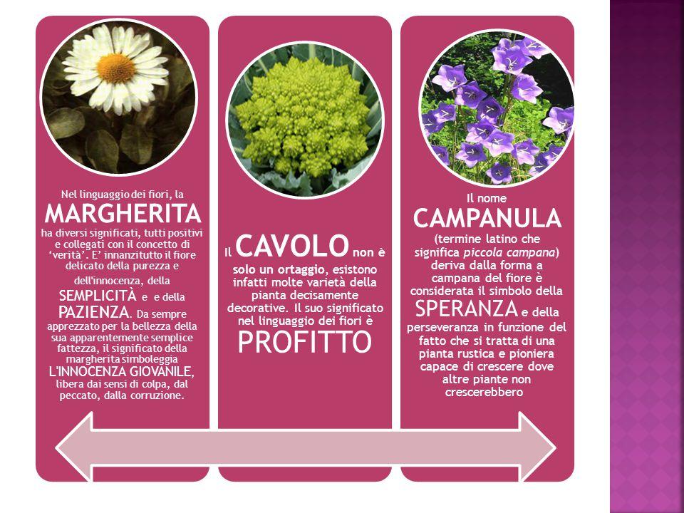 Nel linguaggio dei fiori, la MARGHERITA ha diversi significati, tutti positivi e collegati con il concetto di 'verità'.