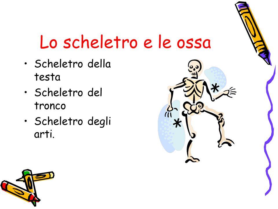 Lo scheletro e le ossa Scheletro della testa Scheletro del tronco Scheletro degli arti.