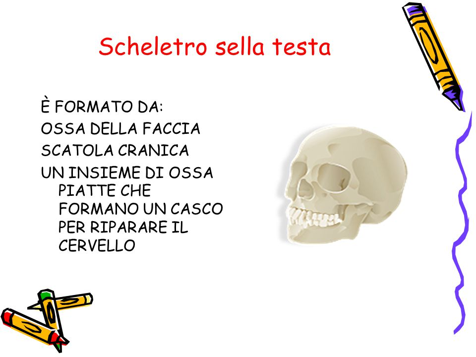 Scheletro sella testa È FORMATO DA: OSSA DELLA FACCIA SCATOLA CRANICA UN INSIEME DI OSSA PIATTE CHE FORMANO UN CASCO PER RIPARARE IL CERVELLO