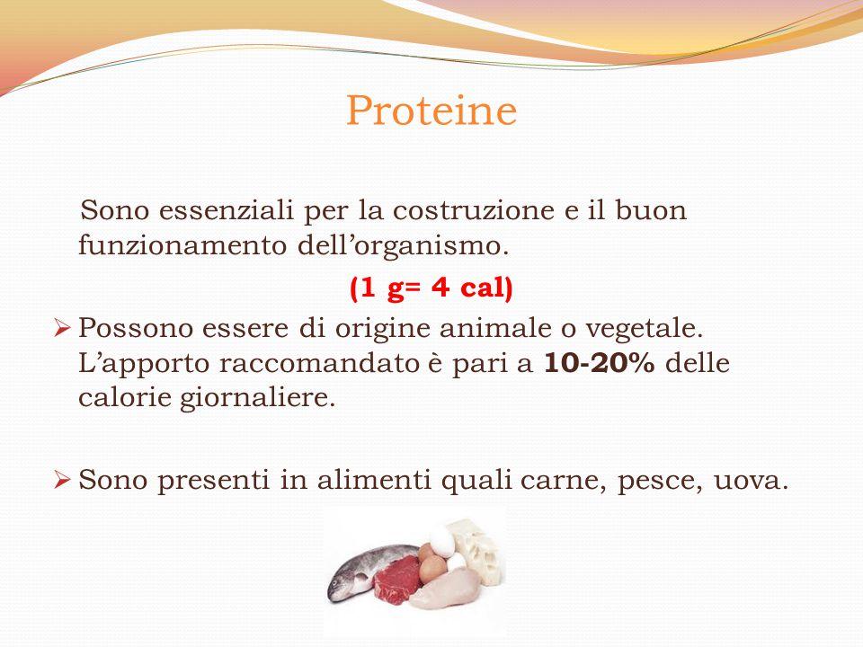Proteine Sono essenziali per la costruzione e il buon funzionamento dell'organismo. (1 g= 4 cal)  Possono essere di origine animale o vegetale. L'app