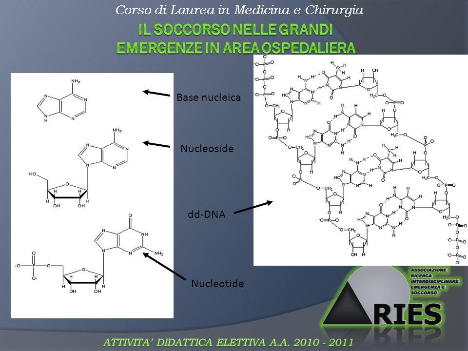 Corso di Laurea in Medicina e Chirurgia Benzene e aromatici Dove si trovano.