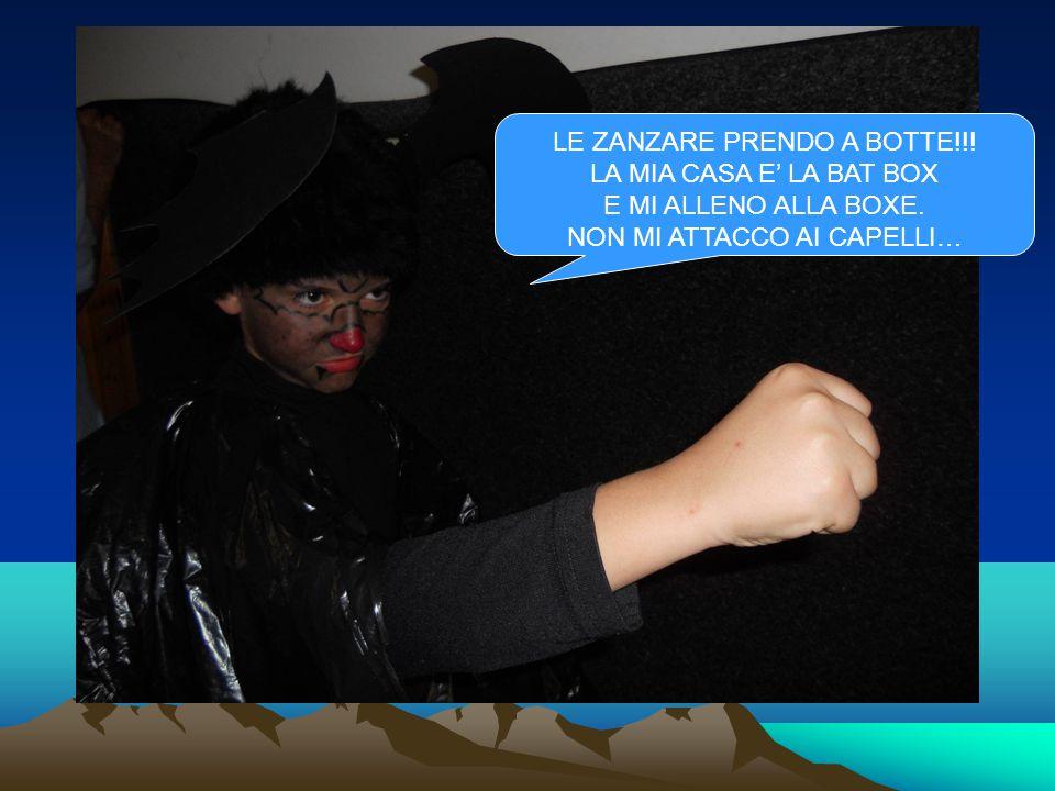 LE ZANZARE PRENDO A BOTTE!!. LA MIA CASA E' LA BAT BOX E MI ALLENO ALLA BOXE.