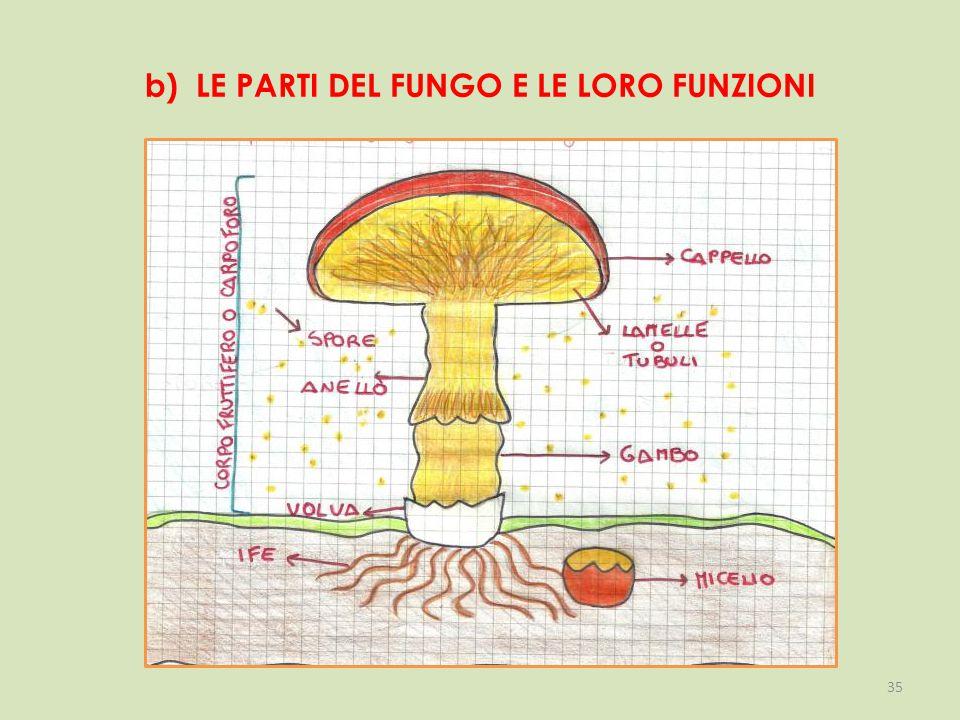 b) LE PARTI DEL FUNGO E LE LORO FUNZIONI 35