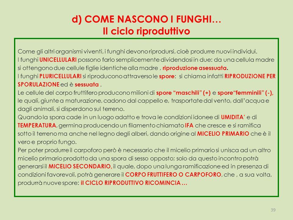 d) COME NASCONO I FUNGHI… Il ciclo riproduttivo Come gli altri organismi viventi, i funghi devono riprodursi, cioè produrre nuovi individui.