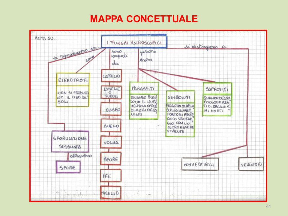 MAPPA CONCETTUALE 44