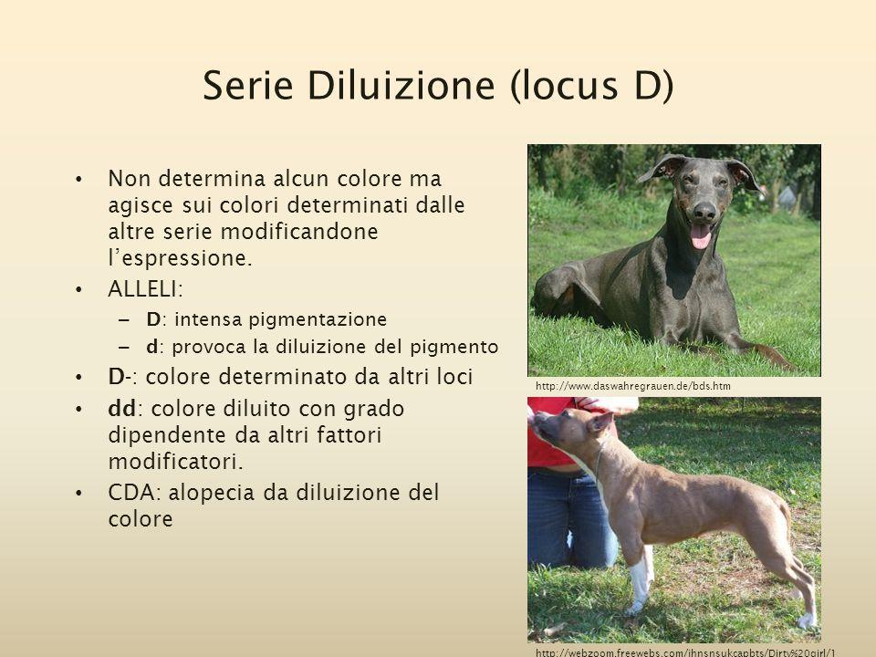 Serie Diluizione (locus D) Non determina alcun colore ma agisce sui colori determinati dalle altre serie modificandone l'espressione. ALLELI: – D: int