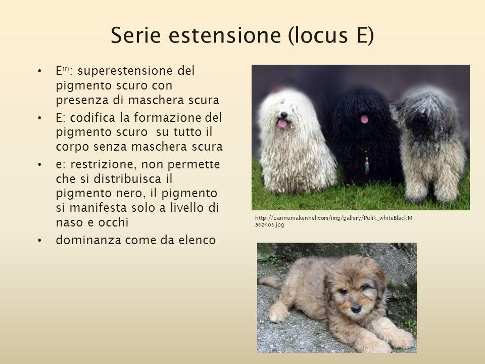 Serie estensione (locus E) E m : superestensione del pigmento scuro con presenza di maschera scura E: codifica la formazione del pigmento scuro su tut