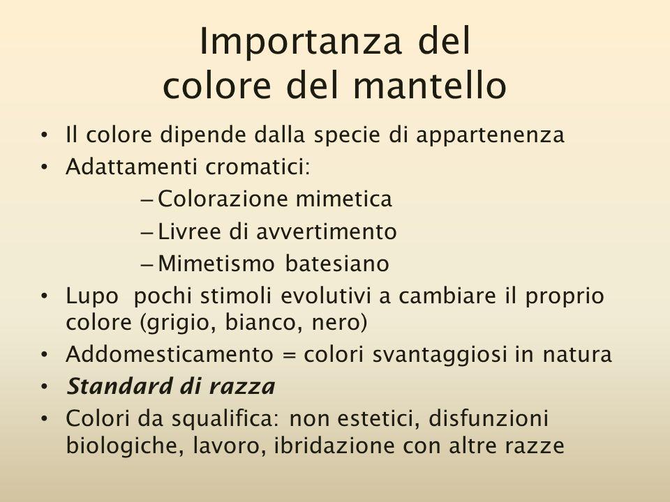 Importanza del colore del mantello Il colore dipende dalla specie di appartenenza Adattamenti cromatici: – Colorazione mimetica – Livree di avvertimen