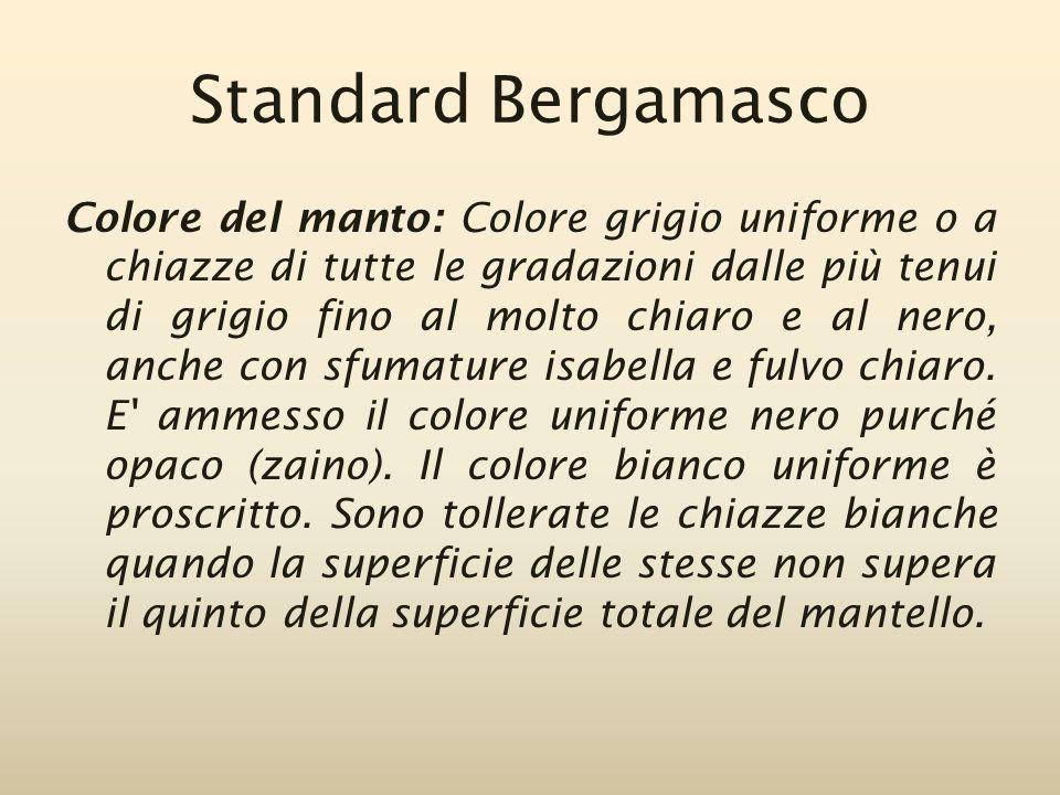 Standard Bergamasco Colore del manto: Colore grigio uniforme o a chiazze di tutte le gradazioni dalle più tenui di grigio fino al molto chiaro e al ne