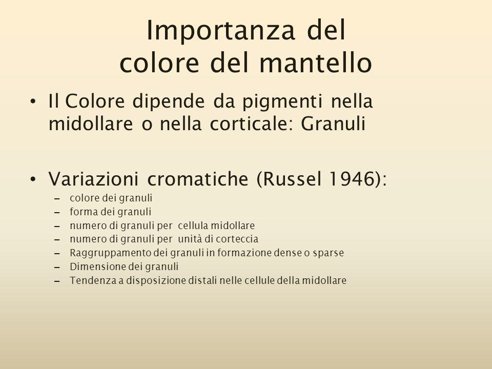 Il Colore dipende da pigmenti nella midollare o nella corticale: Granuli Variazioni cromatiche (Russel 1946): – colore dei granuli – forma dei granuli