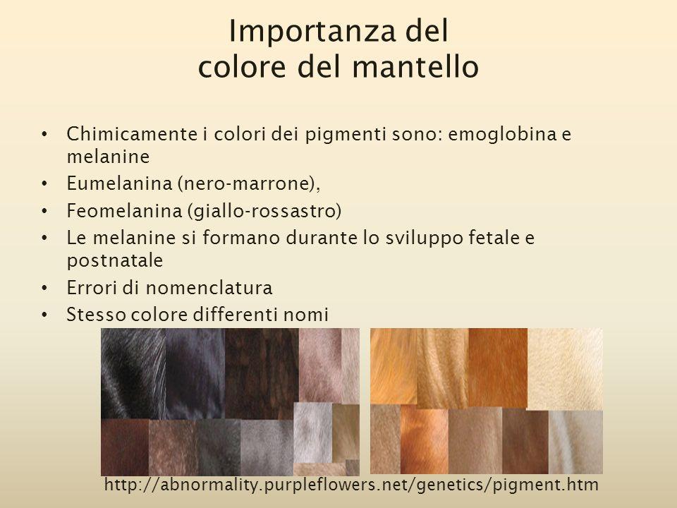 Chimicamente i colori dei pigmenti sono: emoglobina e melanine Eumelanina (nero-marrone), Feomelanina (giallo-rossastro) Le melanine si formano durant