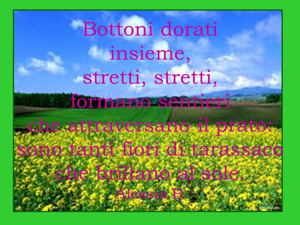 Bottoni dorati insieme, stretti, formano sentieri che attraversano il prato: sono tanti fiori di tarassaco che brillano al sole. Alessia B