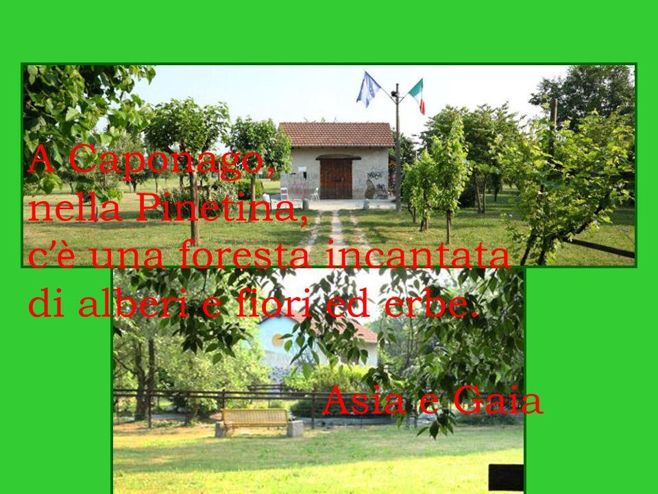 A Caponago, nella Pinetina, c 'è una foresta incantata di alberi e fiori ed erbe. Asia e Gaia