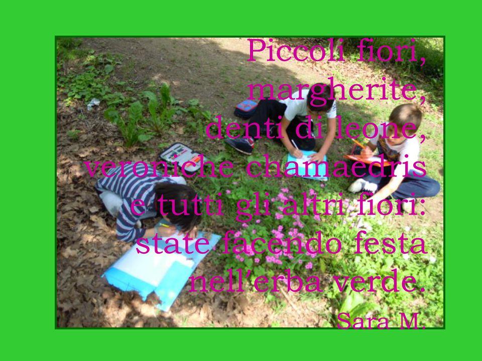 Piccoli fiori, margherite, denti di leone, veroniche chamaedris e tutti gli altri fiori: state facendo festa nell ' erba verde. Sara M.