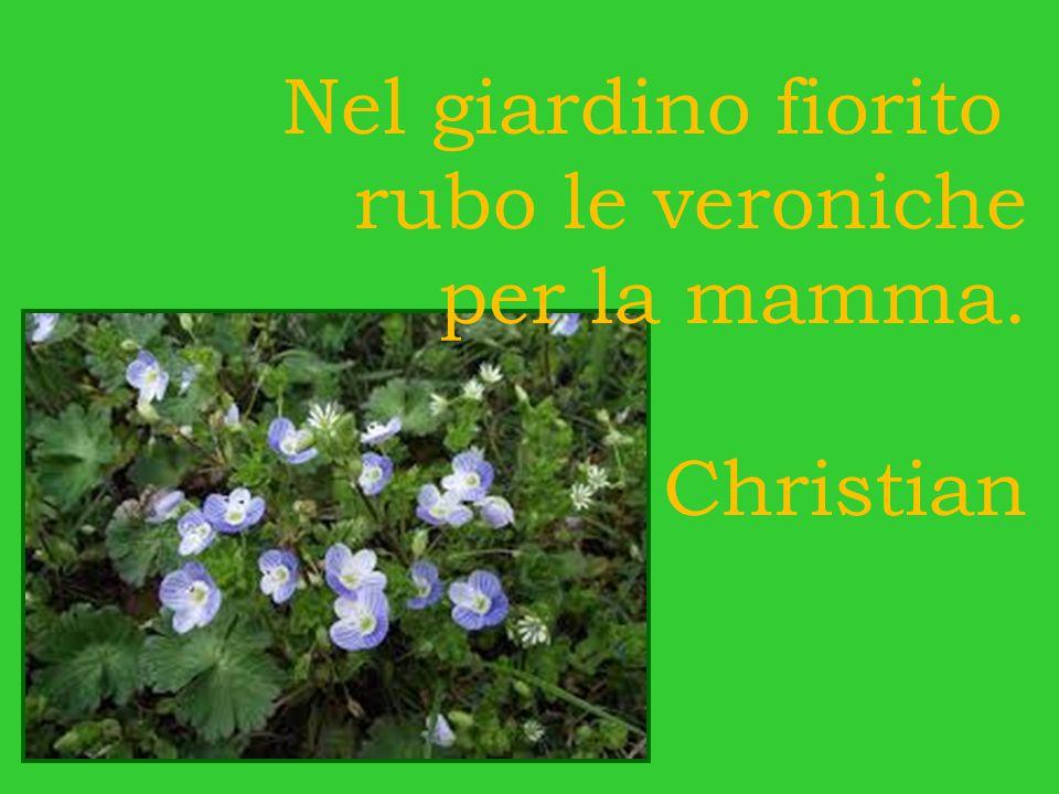 Nel giardino fiorito rubo le veroniche per la mamma. Christian