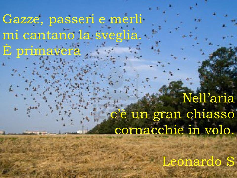 Gazze, passeri e merli mi cantano la sveglia. È primavera Nell'aria c'è un gran chiasso cornacchie in volo. Leonardo S