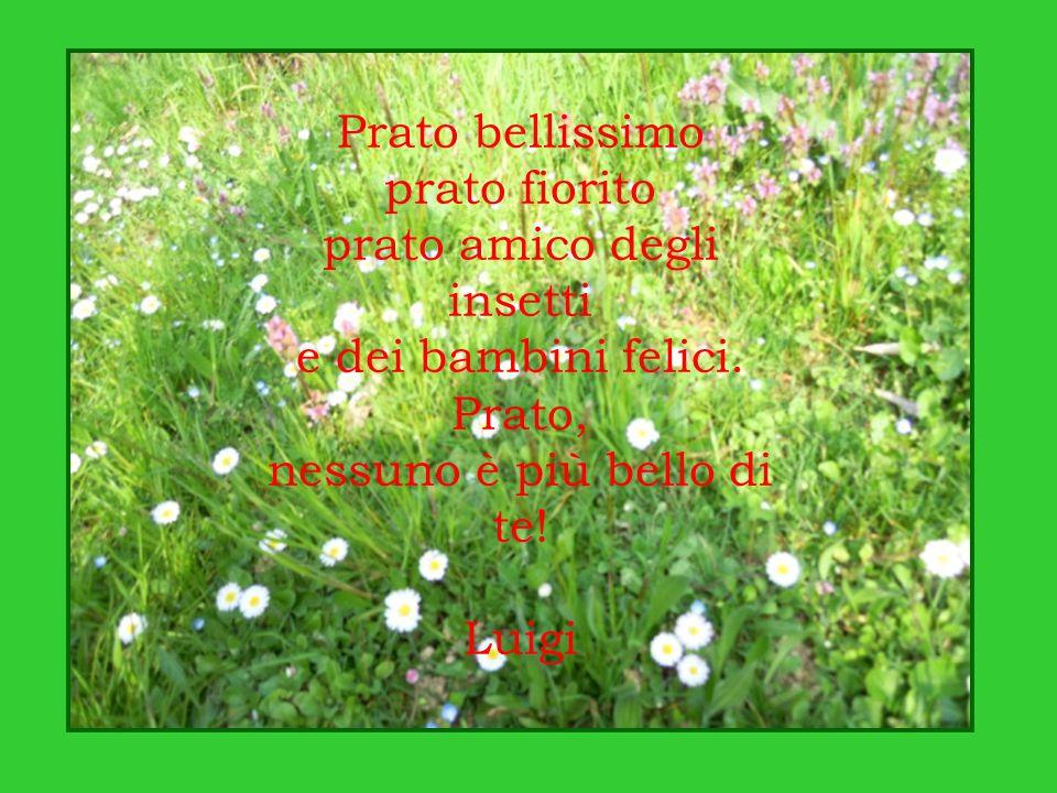 Prato bellissimo prato fiorito prato amico degli insetti e dei bambini felici. Prato, nessuno è più bello di te! Luigi